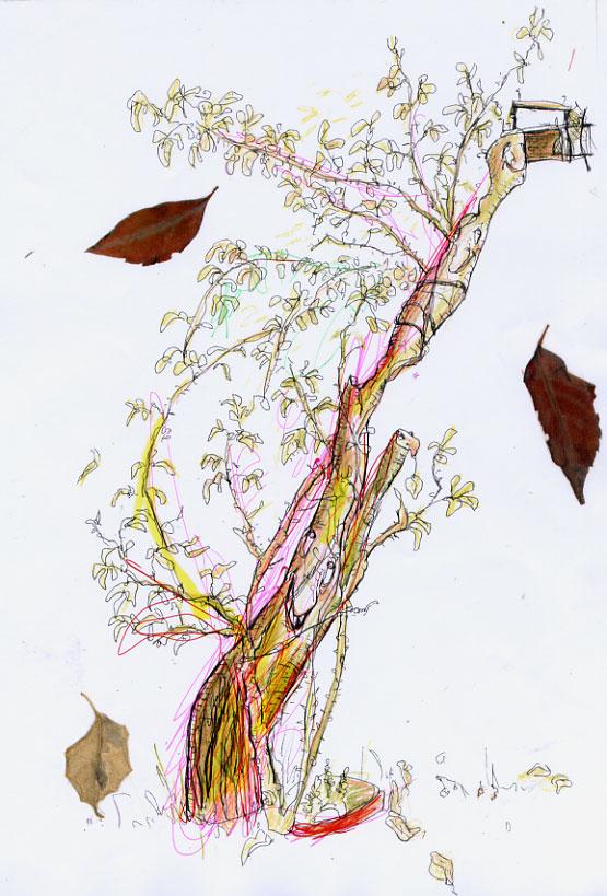 http://www.virginiebroquet.fr/wp-content/uploads/2015/02/vignettes-arbre-automne.jpg